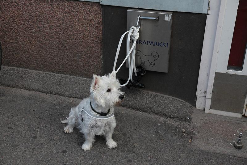 犬をつなぐ場所