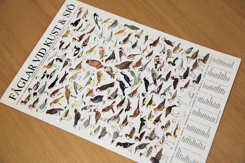 鳥のミニポスター