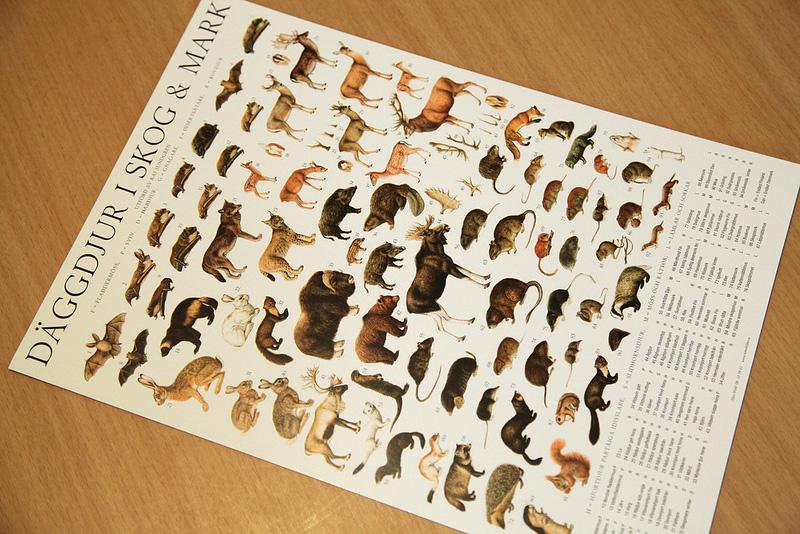 動物のミニポスター