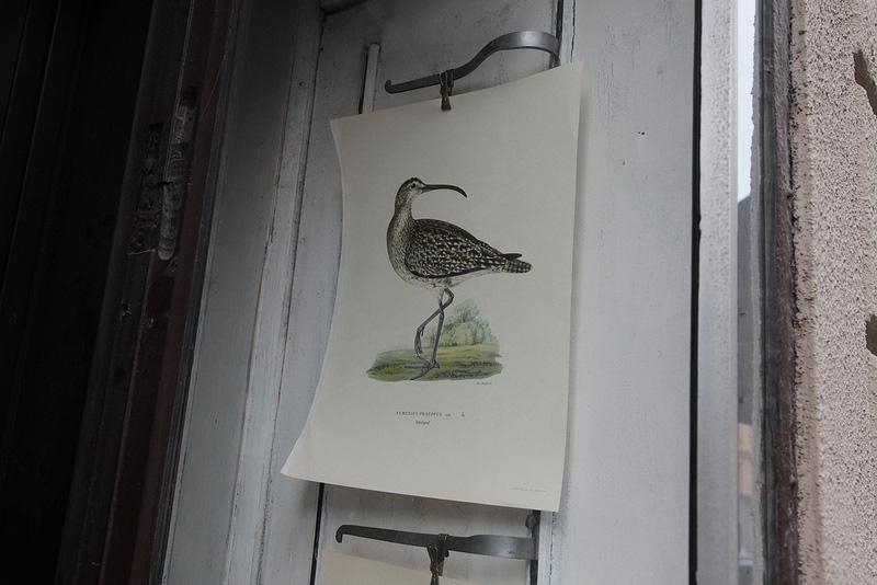 鳥の博物画