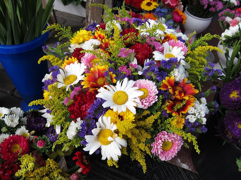 彩りがきれいな花