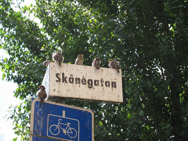 標識に並ぶスズメたち